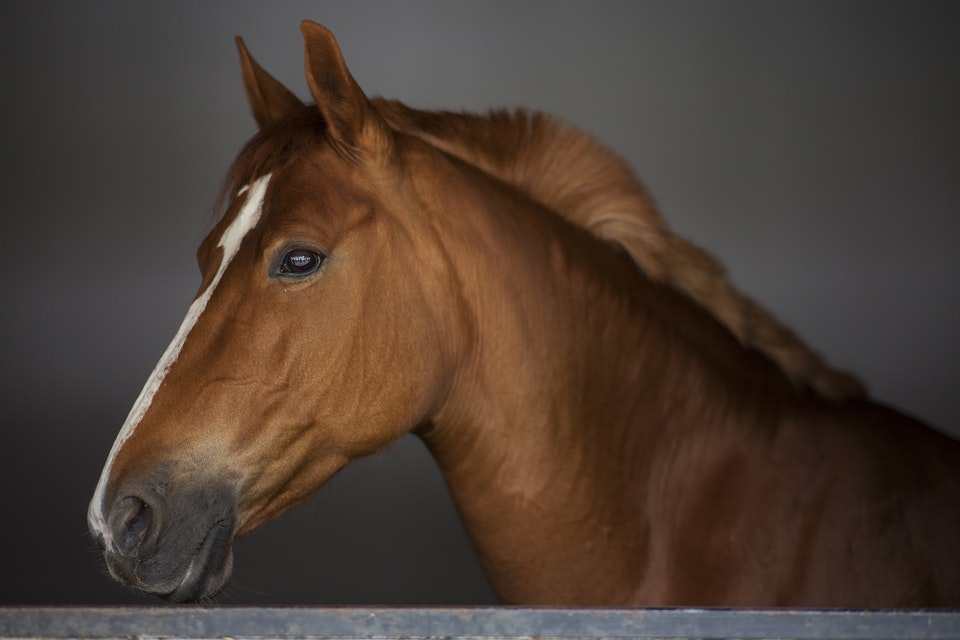 Lizawki dla koni